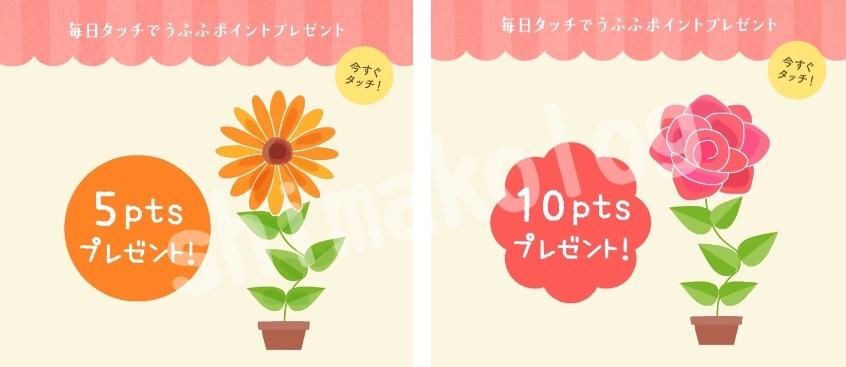 お花にお水をあげてうふふポイントをゲット